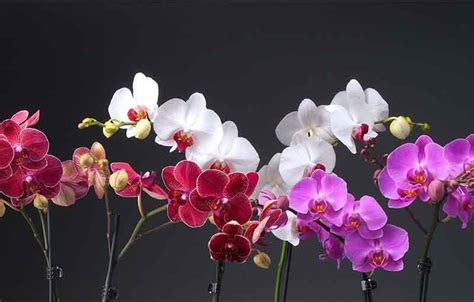 arti warna bunga anggrek outerbloom florist