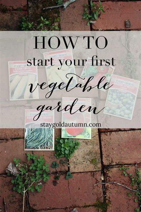 Step By Step Vegetable Garden 10 Pinteresting Teach Us How To Grow A Vegetable Garden