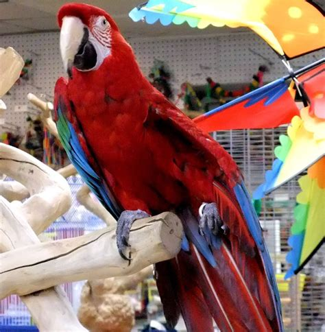 world of birds 21 photos pet stores 15 perry st