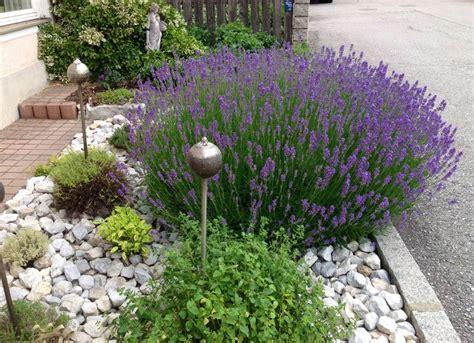 Garten Lavendel Pflanzen by Lavendel Oregano Salbei Thymian Bohnenkraut Mit Silbernen