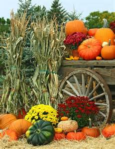harvest colors pin by stacia cook on harvest time