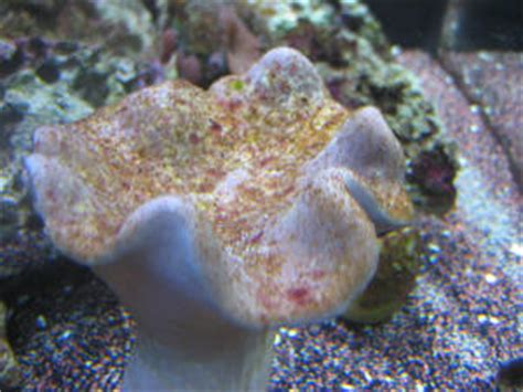 toadstool is changing colors help saltwaterfish forum