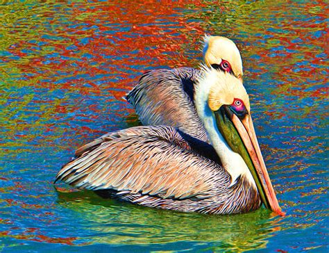 color my pelicans digital by valle