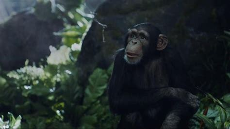 who is the new tarzan geico commercial geico tarzan commercial who is jane