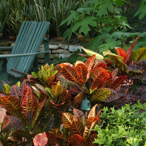 keller landscaping options tropical plants captain ron