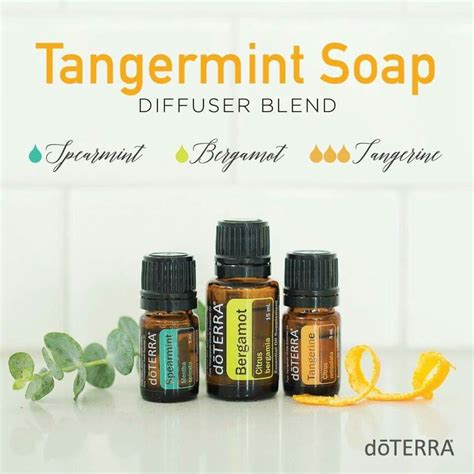 Diffuer Recipes For Detox by 17 Best Ideas About Tangerine Essential On