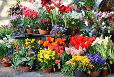 Flower Bulb Planter by Preparing Fall Bulb Planters For