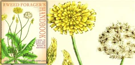 the digger and the flower books foragers handbook pb 166 pages the diggers club