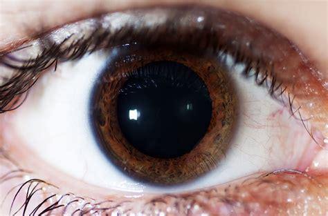 imagenes reales de ojos 211 ptica por la cara macrofotograf 237 a del ojo humano