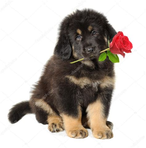 mouthy puppy puppy with flowers in flowers ideas