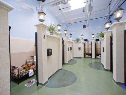 luxury dog hotels  luxurious pet hotels  los
