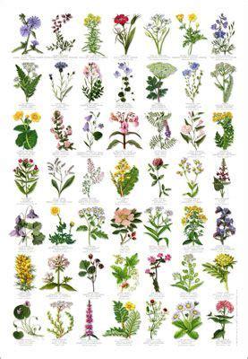 Garden Flower Identification The World S Catalog Of Ideas