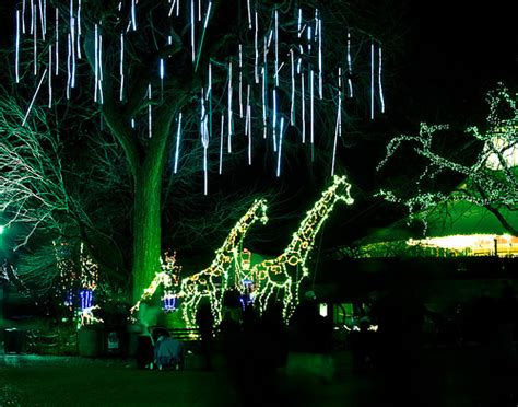 lincoln park zoo lights lincoln park zoo lights flickr photo