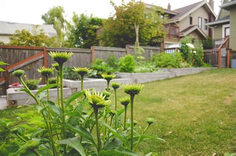 backyard urban farm company queen anne backyard oasis seattle urban farm company