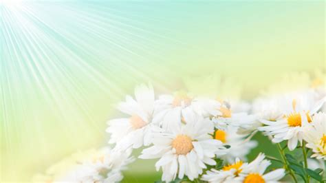 flowers that bloom at beautiful flowers wallpapers flower wallpaper background 25429 wallpaper cool