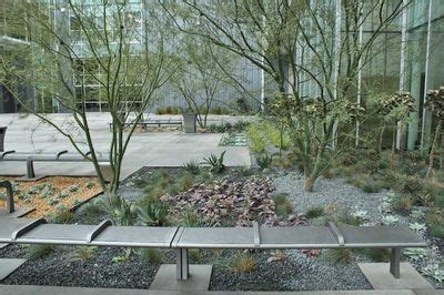 Rock Valley Garden Center Best 25 Palo Verde Ideas On Olive Garden San Antonio Desert Landscaping Backyard