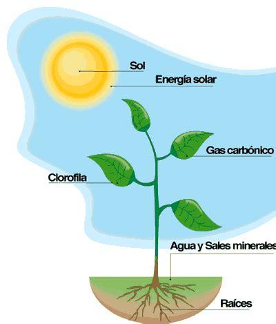 olguchiland las plantas ii esquema de una planta image