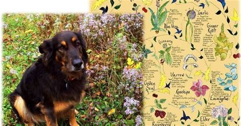 is rosemary safe for dogs ottawa valley whisperer herbs spices for dogs cats bad for dogs cats