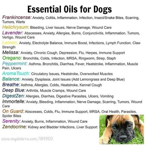 essential oils for fleas on dogs best 25 essential oils dogs ideas on oils for dogs calming essential