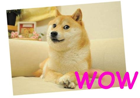 Meme Dog Wow - wow doge meme www pixshark com images galleries with a