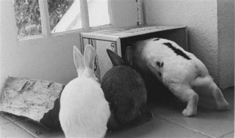 Rabbit House Society by 12 Best Images About Outdoor Landscaping Rabbit On