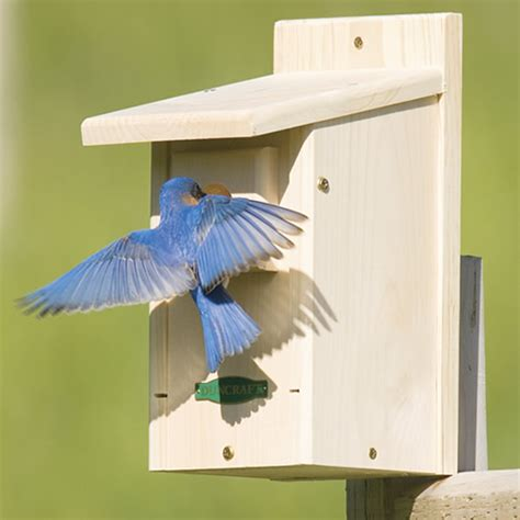 where to place bluebird house where to place bluebird house 28 images gilbertson bluebird and small bird house