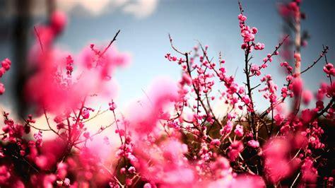wallpaper hd widescreen high quality desktop flower full hd for best peach flower wallpaper widescreen high