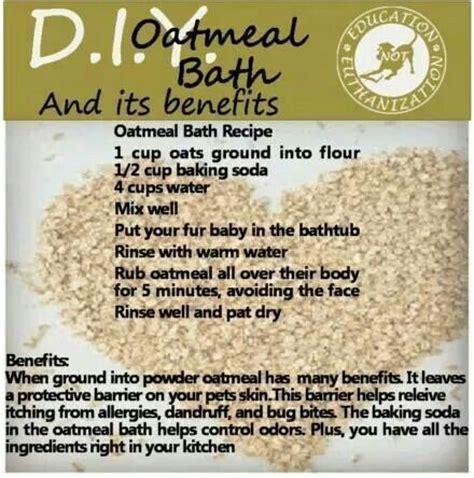 oatmeal bath for dogs oatmeal bath for dogs healthy skin healthy hints for dogs healthy