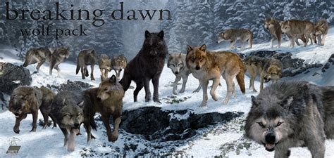 Saga Of The Wolf the world of wolves breeds picture