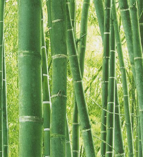 imagenes zen bambu bamb 250