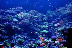Pictures Wallpapers Coral Reef Wallpapers Wallpaper Cave