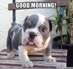 morning puppy welcome to memespp