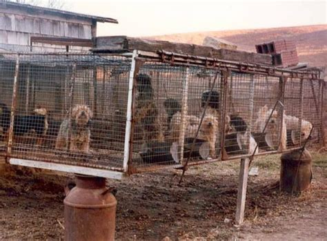 puppy mills list 17 best images about things that disgust me on shelters dogs and south korea
