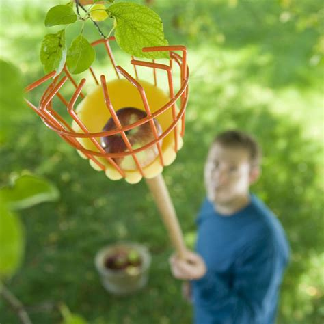 Water Vases Tree Fruit Picker The Green Head