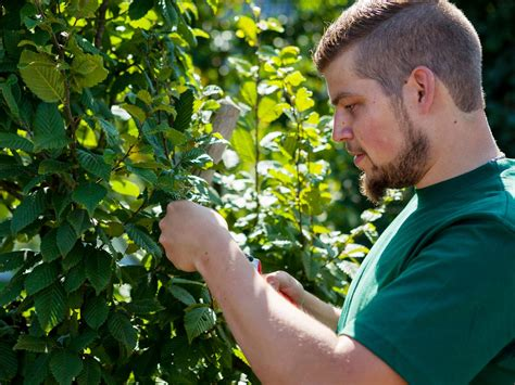 gartenbau münster bruner bilder news infos aus dem web