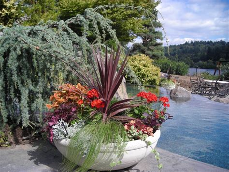 decorative yard plants decorative plant containers that add highlights to your