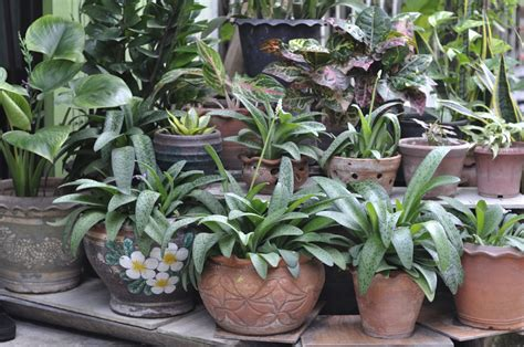 bring  potted plants tips  bringing