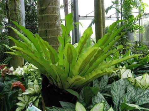come curare piante da appartamento felce piante da interno come curare la felce