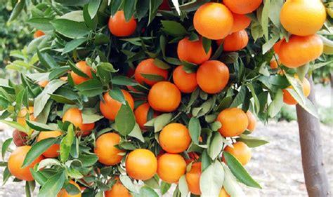 tanaman buah untuk dataran rendah
