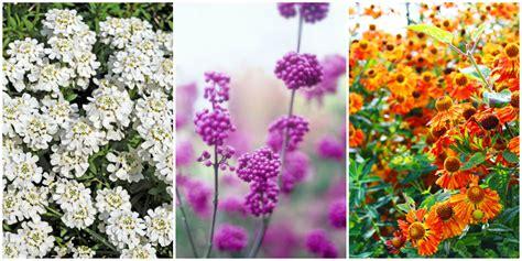 20 fall flowers to plant pretty fall flowering