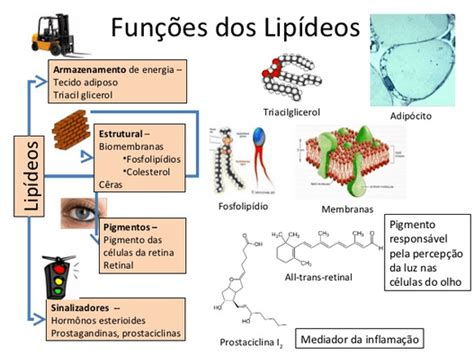 proteinas e lipidios metabolismo de lip 237 dios cola da web
