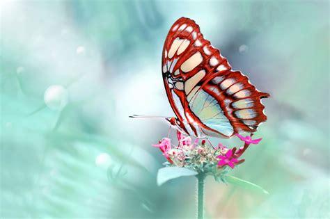 Imagenes Mariposas Mas Bonitas Mundo | banco de im 193 genes las mariposas m 225 s hermosas del mundo