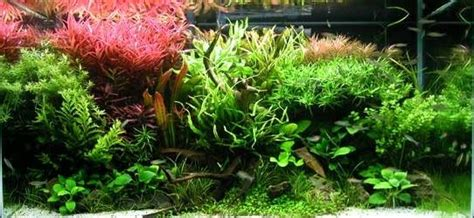 what kind of light for aquarium plants led aquarium lighting best seller 54w81w108w led aquarium