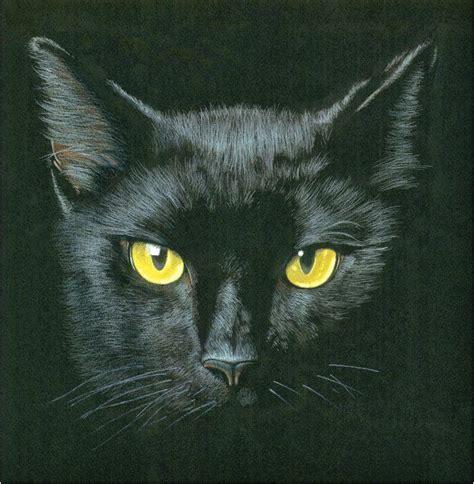imágenes gato negro 17 mejores im 225 genes sobre gatos negros en pinterest