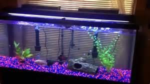 My 55 gallon tank setup   3 Oscars, Pacu, 2 Parrot Fish   YouTube