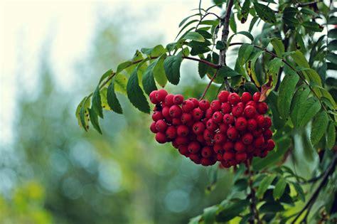 c fruit plano frozen fruits hd desktop wallpaper widescreen high