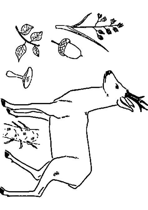Hirsche Und Rehe 3051 by Hirsche Und Rehe Unterschied Elch Und Hirsch Reh Und