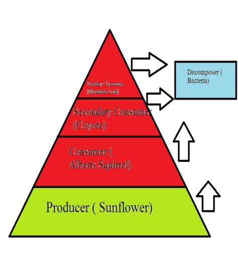 Factors Of 481 greatsanddunesnationalparkum food web and food pyramid