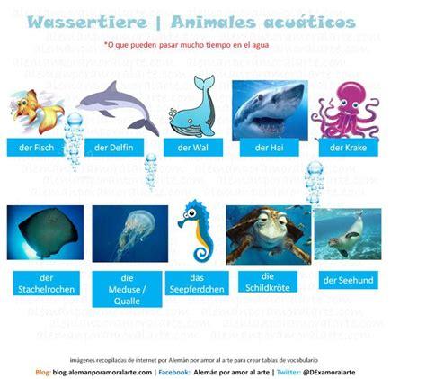 imagenes de animales marinos con sus nombres vocabulario para aprender los nombres de algunos de los