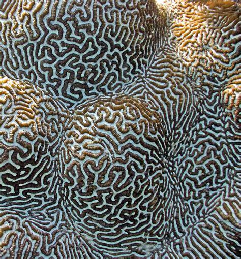 coral pattern ocean patterns madang ples bilong mi